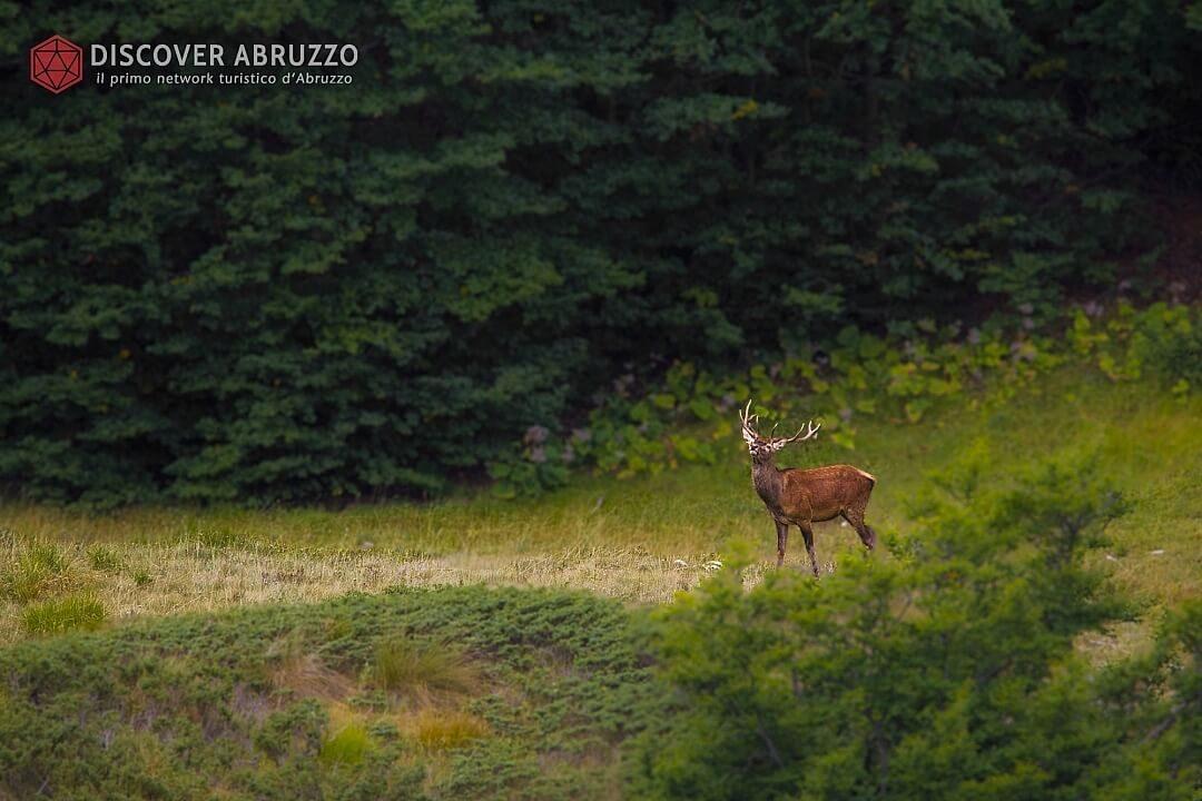 Wildlife Bramito Discover Abruzzo Cervonobile Nature 1