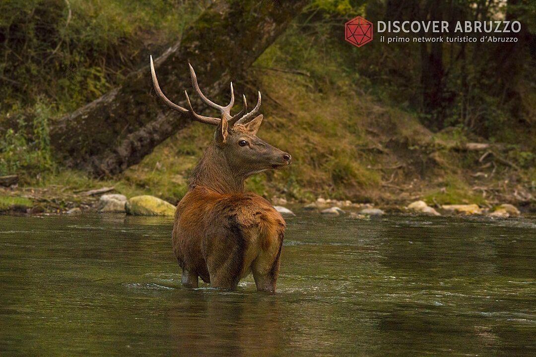 Wildlife Bramito Discover Abruzzo Cervonobile Nature 3