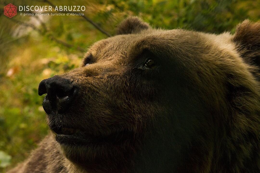 Wildlife Orsomarsicano Discover Abruzzo Nature Ours 2