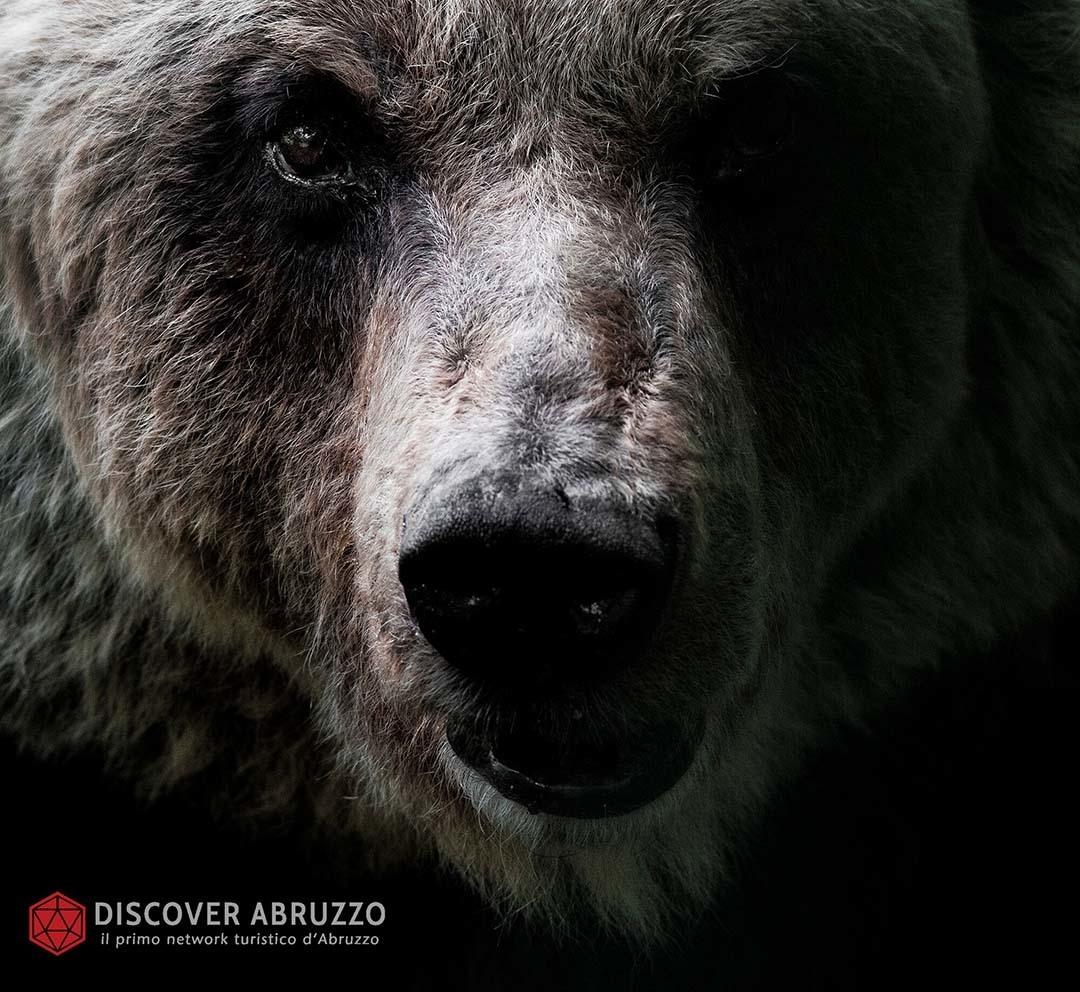 Wildlife Orsomarsicano Discover Abruzzo Nature Ours 3