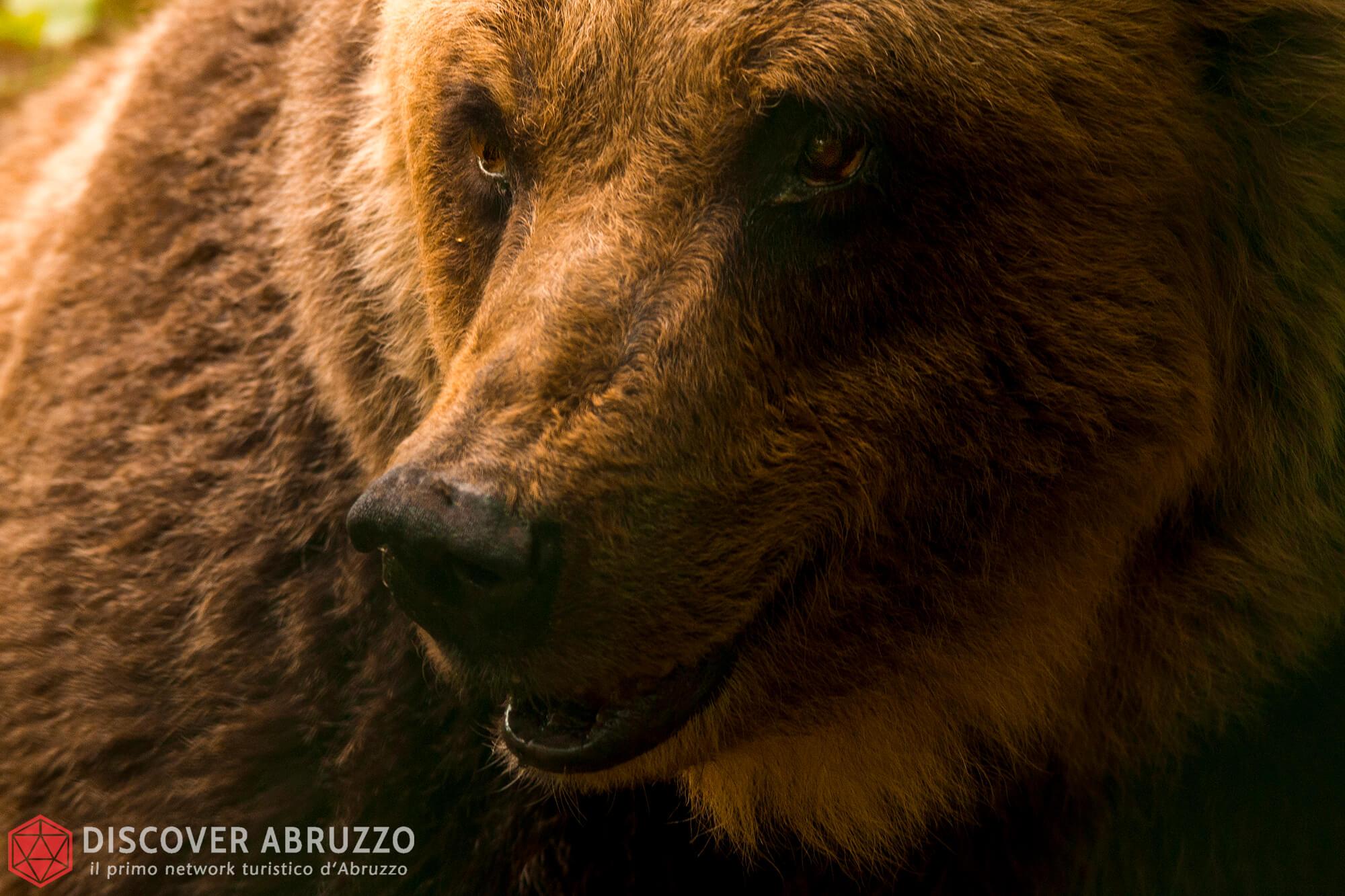 Wildlife Orsomarsicano Discover Abruzzo Nature Ours 4