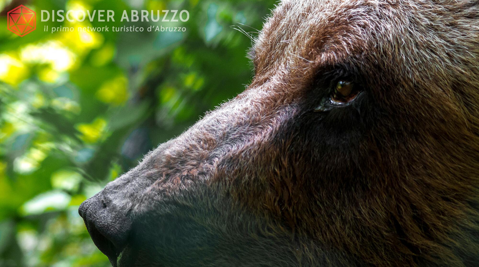 Wildlife Orsomarsicano Discover Abruzzo Nature Ours 5