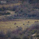 Discover Pagliare Tione Borghi Antichi Pastori Abruzzese Natura Rurale Tradizioni (6)