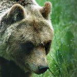 Ecotur Sulle Tracce Dell Orso Marsinaco Discover Abruzzo