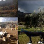 Fattoria 25 Aprile Asini Muli Trekking Baronia Valle Magica