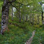Faggete Secolari Unesco Patrimonio Faggi Climax Biodiversità