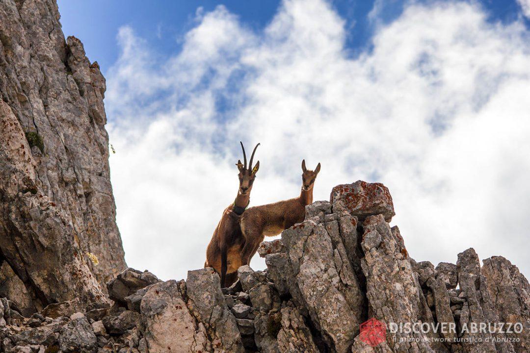 Abruzzo Trekking Escursioni Camminare Parchi Nazionali Natura Animali Montesirente