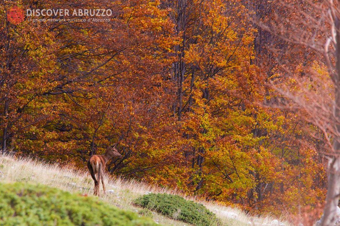 Abruzzo Trekking Escursioni Camminare Parchi Nazionali Natura Animali Valdirose