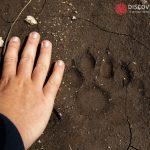 Abruzzo Trekking Escursioni Natura Fauna Orso Lupo Bambini Famiglie Fotografia 1