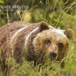Abruzzo Trekking Escursioni Natura Fauna Orso Lupo Bambini Famiglie Fotografia 9